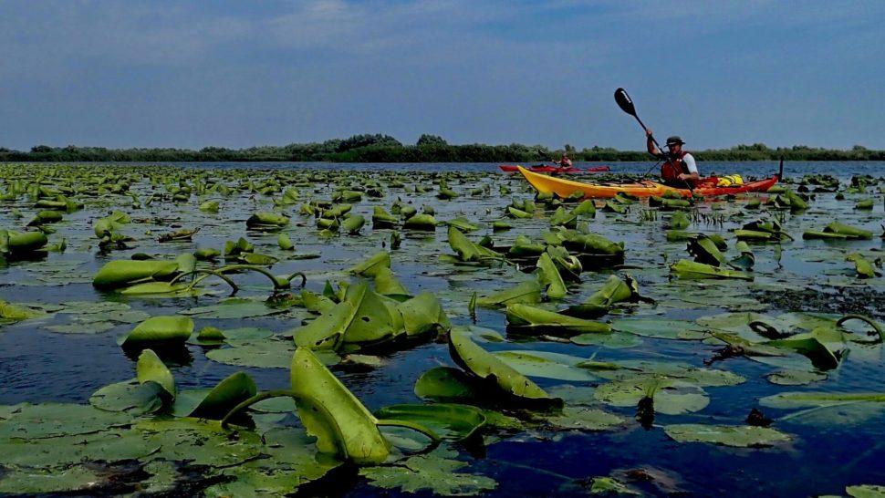 Delta Dunaja namorskom kajaku
