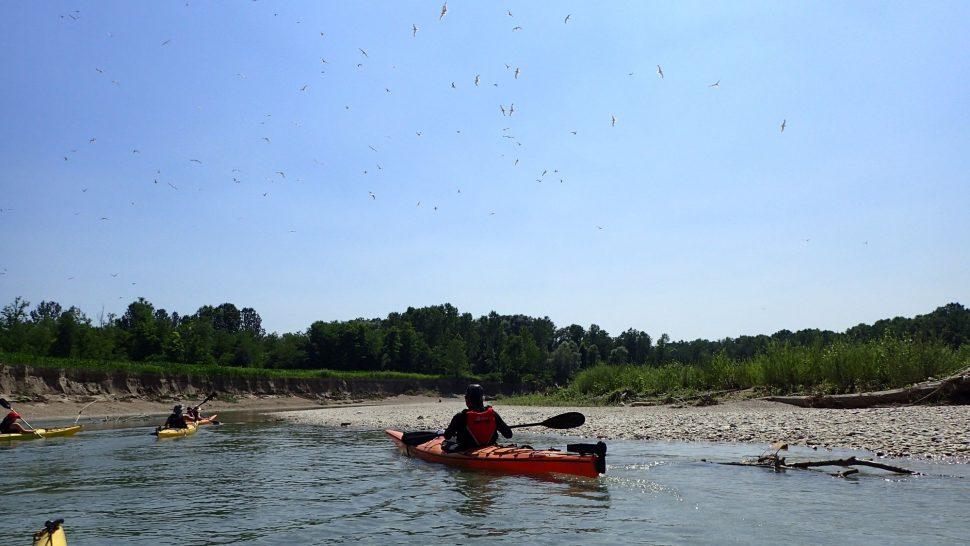 Tagliamento kayaking - day 2